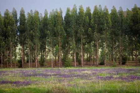 Floresta_2